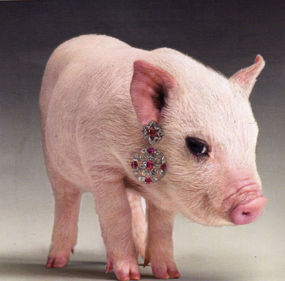 Pig-wearing-jewelry2.jpg